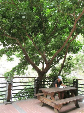 Eyeemtaiwan Travel Photography Trees EyeEmNewHere The Week On EyeEm Beauty In Nature Nature One Person Outdoors One Man Reading Streetphotography