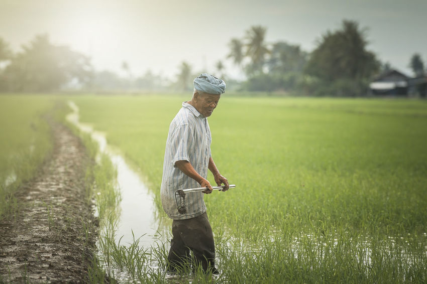 Life of farmer at paddy fields Adult Adults Only Backgrounds Farmer's Life Food Grass Happy Healty Food Healty Life Lifestyles Morning Nature Nature Photography Old One Man Only One Person Outdoors Paddy People Potrait_photography Reward River Sunrise, Sunshine Working