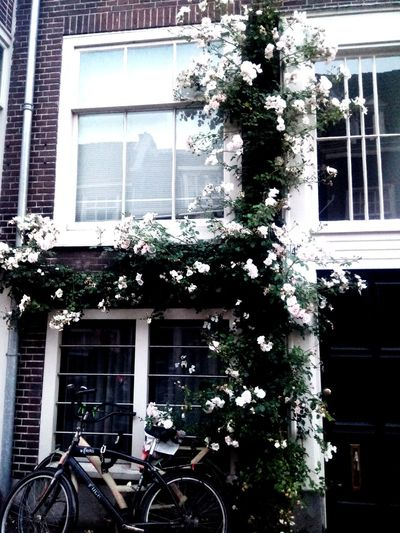 Amsterdam Streetphotography House House Plant Tree Flower Window Box Window Architecture Close-up Building Exterior Built Structure Plant