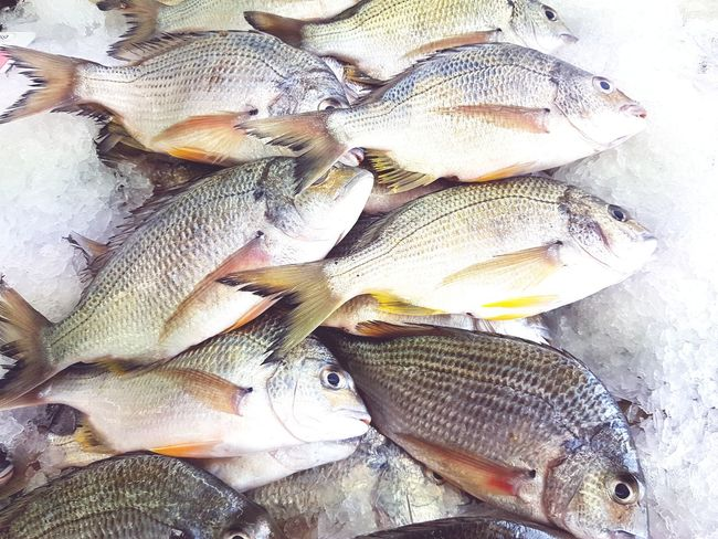 Seafood Fish No People Raw Food Food And Drink High Angle View Market Directly Above Freshness Food Healthy Eating Ocean Sea Seafood Fish Market Fresh Fish Bream Sea Bream Golden Bream whole fish Whole Fish
