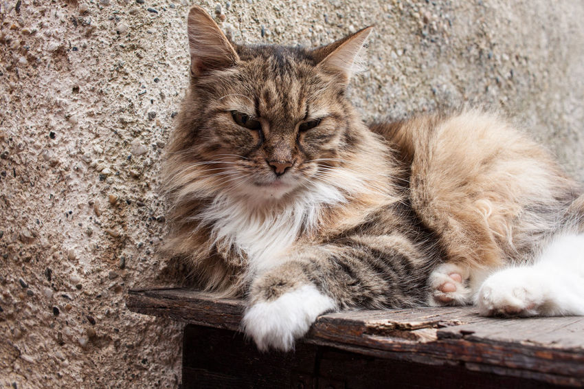 Animal Themes Close-up Day Domestic Animals Domestic Cat Feline Indoors  Kitten Mammal No People One Animal Pets Sitting Whisker