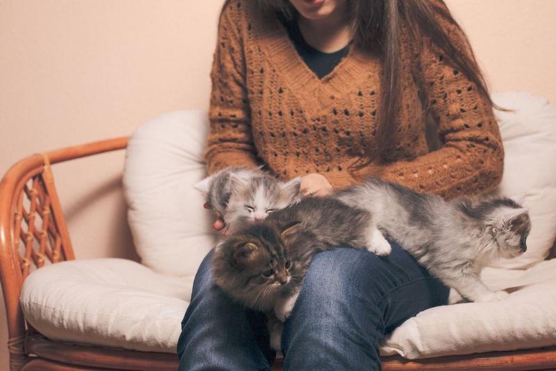 Full length of cat lying on sofa