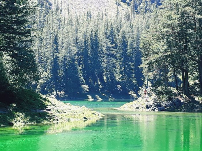 green lake & forest 🌳💚 Forest See Grün Natur Steiermark Austria Sun Grüner See Tragöss Holiday Sunny Vacation Styria Vacations Water Tree Reflection Nature Outdoors Beauty In Nature Day No People Lake Waterfront Green Color Scenics Growth Forest