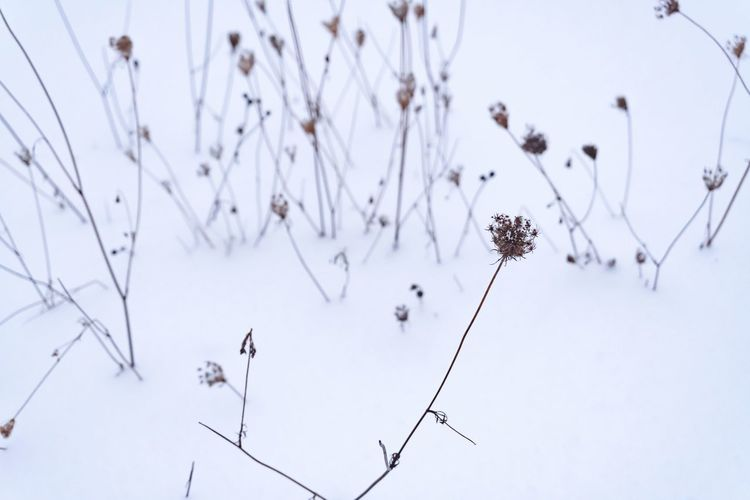 Close-up of dry plants against sky during winter