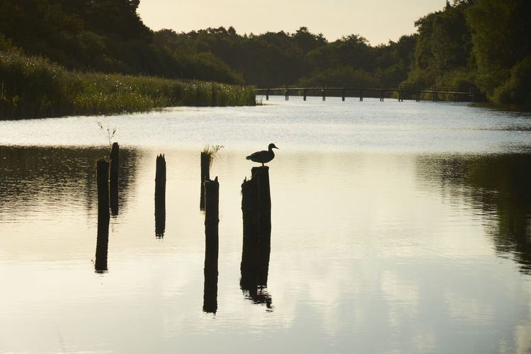View of bird on wooden post in lake