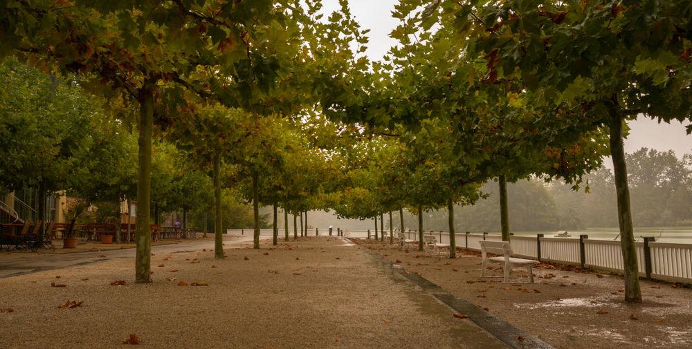 Baumallee Herbststimmung Regentag Spaziergang Durch Den Herbst. Autumn In A Row Nature Park Plant Tree Treelined