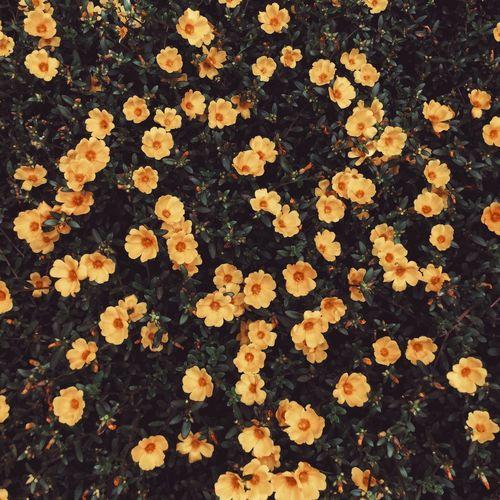 街边的鲜花