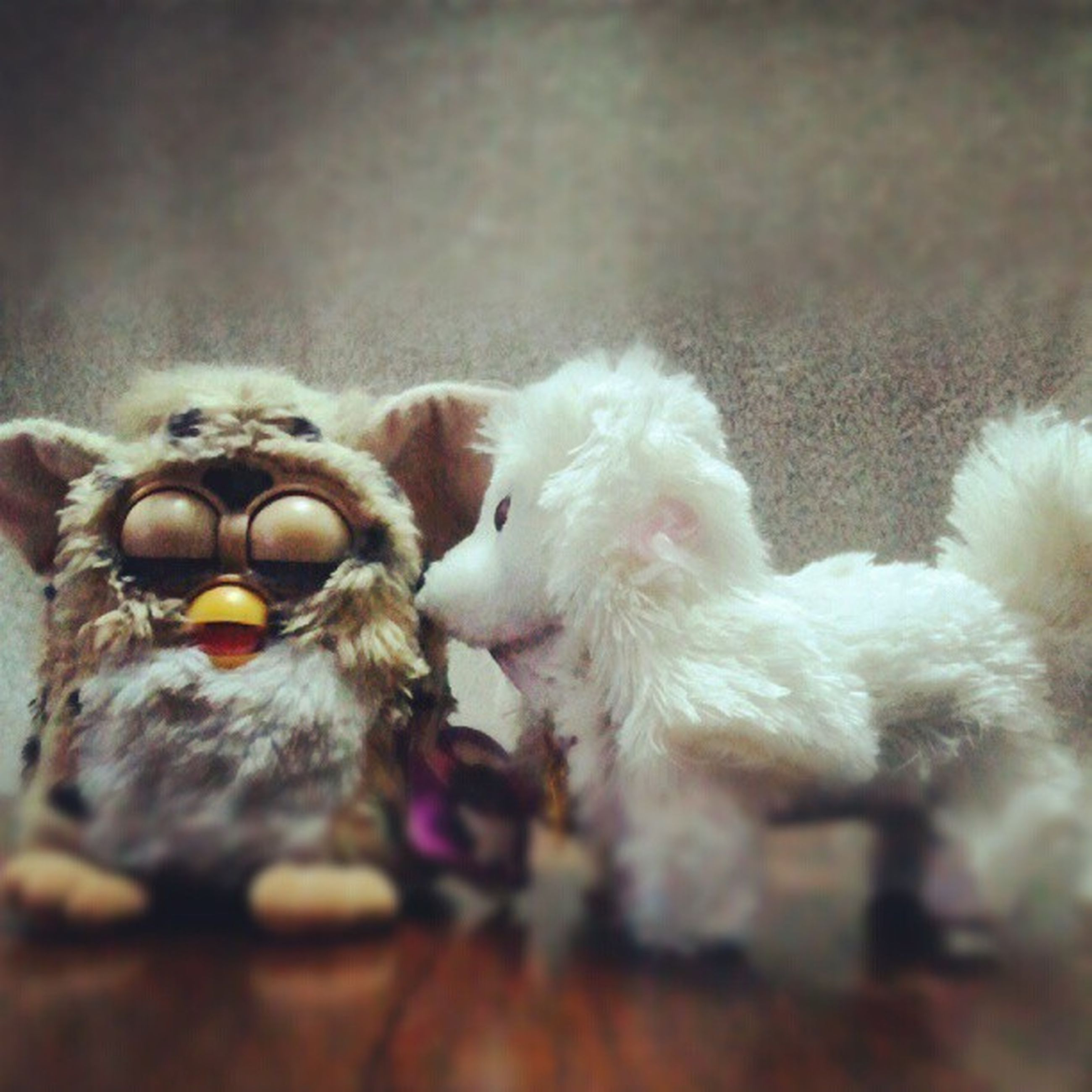 animal themes, domestic animals, one animal, mammal, selective focus, pets, indoors, close-up, two animals, dog, toy, young animal, no people, focus on foreground, togetherness, white color, day, stuffed toy, animals in the wild, nature