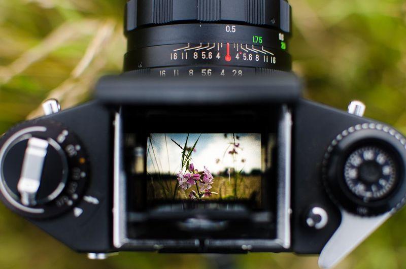 Flowers Seen Through Vintage Camera