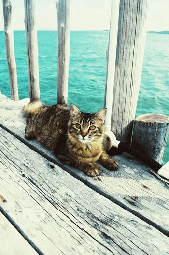 Portrait of cat sitting on wooden post