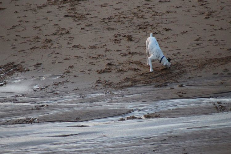 Nature Animal Animal Themes Beach Beauty In Nature Day Details Of Nature Dog Doglover Dogslife Dog❤ Domestic Animals High Angle View Mammal Minimal Minimalism Motion No People One Animal Outdoors Pets Sand Sand Patterns Water Wet