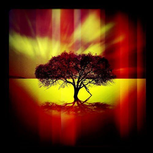 Exodus: Original Art Originaldesign Original Artwork Graphicart Acid Trip Mesmerizing Reflections Treeoflight Ethereal The Burning Tree #anthonyerik #hypnotic art #hallucinogenic art #mysterious art