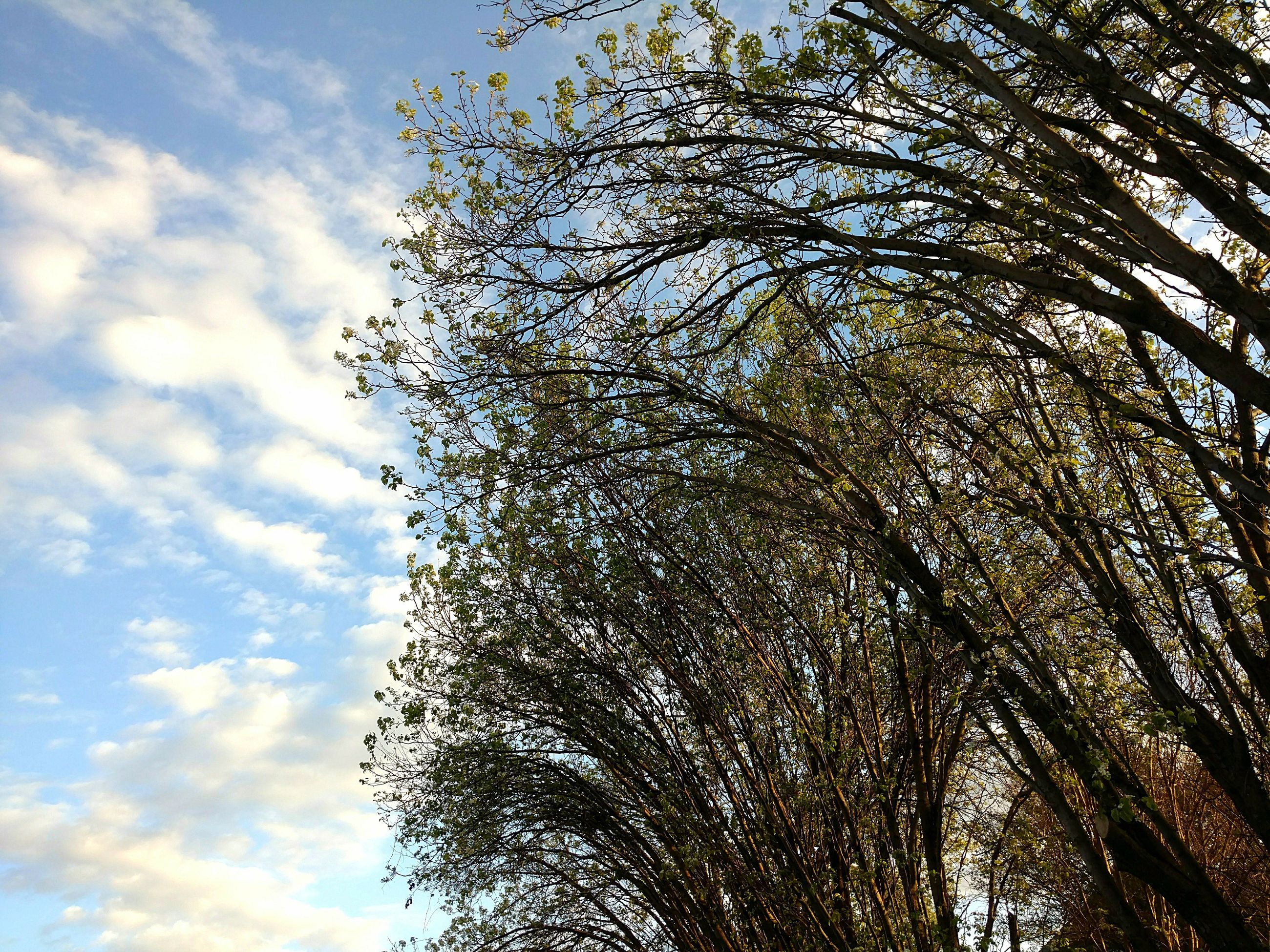 low angle view, sky, nature, no people, growth, beauty in nature, tree, sunlight, day, tranquility, cloud - sky, outdoors