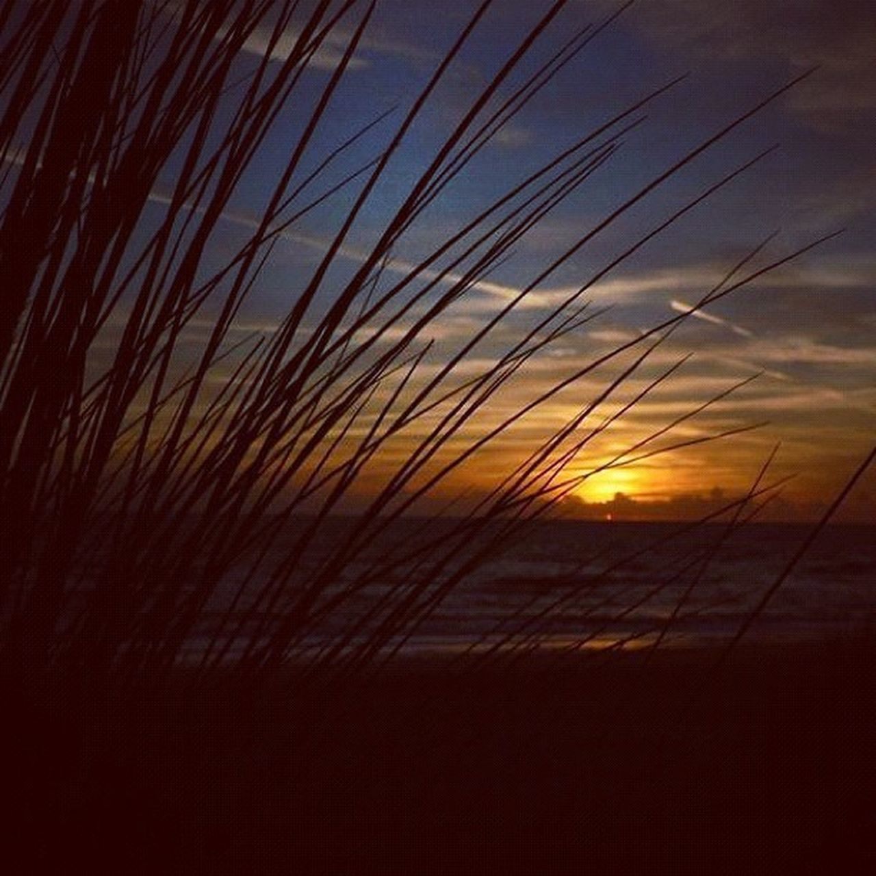 sunset, nature, scenics, silhouette, sky, beauty in nature, sun, tranquil scene, tranquility, outdoors, no people, growth, close-up, day