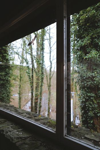 Sticker View Barrier Bird Day Forest Growth Indoors  Ivy Landscape Nature No People Outdoors Park Sky Tree Window Window Stickers