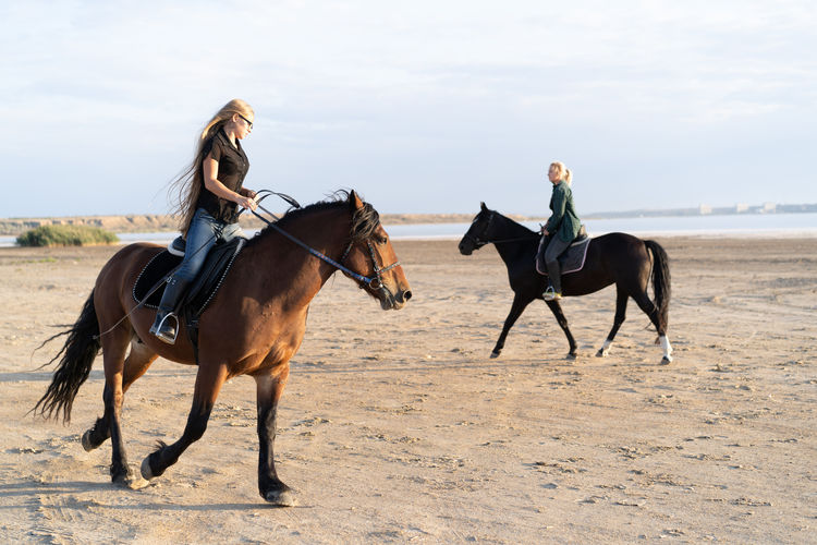 Horse riding horses on land