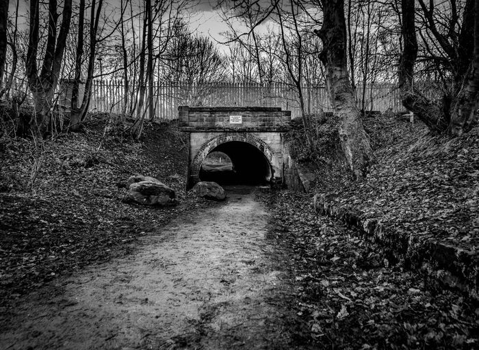 forest trees bridge train black and white dark horseback road Tree Architecture Under Arch Bridge Footbridge Below Bridge Bridge - Man Made Structure Long