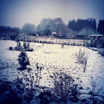 Winter Tagsforlikes Snow Zima_letos_nic_moc czechrepublic garden white nature