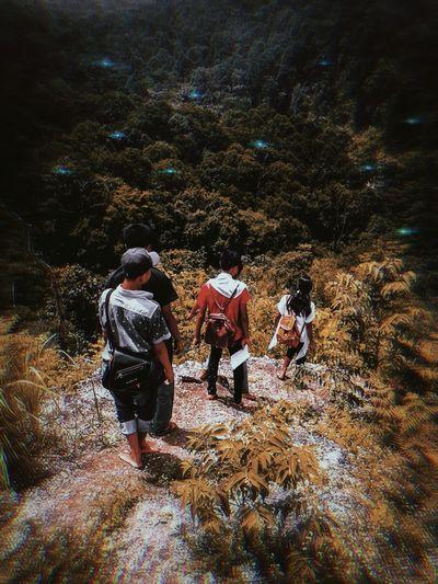 Rear view of people walking on rocks in forest