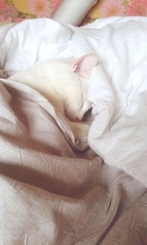 Mon bébé chat dort ! Catoftheday