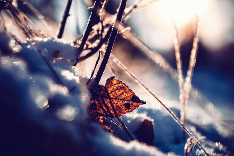 Plant Nature Leaf Plant Part Selective Focus Close-up Dry Day No People Autumn Tree Beauty In Nature Sunlight Winter Cold Temperature Outdoors Vulnerability  Fragility Change Branch Leaves Dead Plant Dried