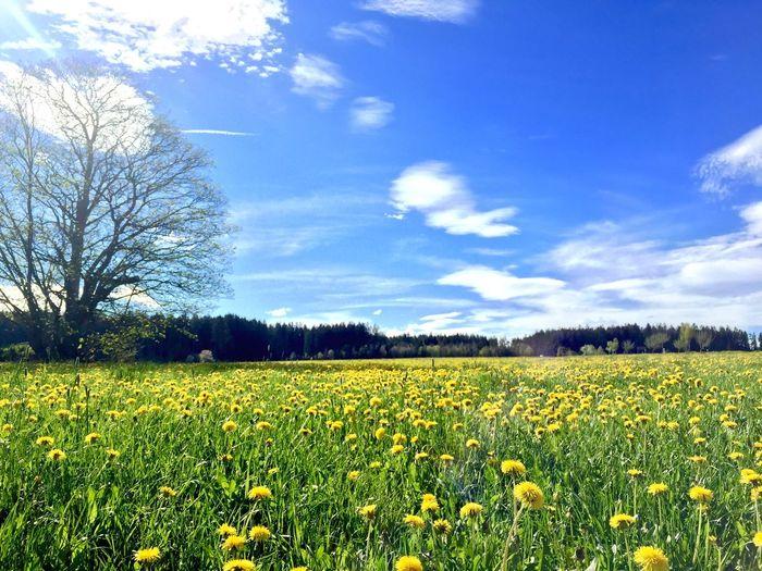 Maiwiese Maytime Königsfeld Wanderlust Enjoying Life Black Forest