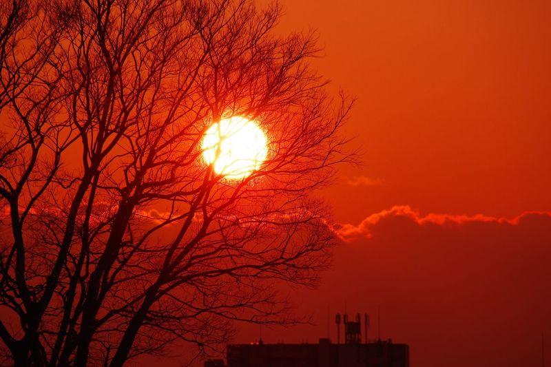 Sunset 淀川 Tree
