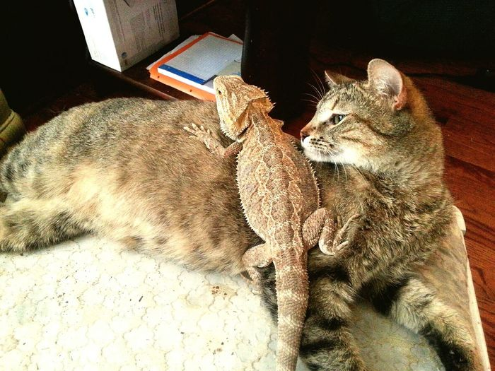 Check This Out Pet Photography  Petlovers Pet Love Cute Pets Cute Cats Bearded Dragon
