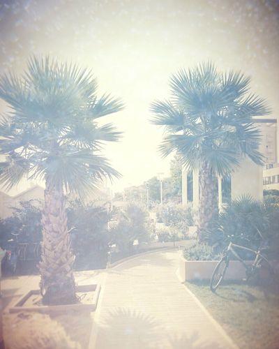 Relaxing Time Riccione 2015  Picoftheday Beautiful Day Beautiful Places Beautifullandscape Cartolina Palm Trees Beautifull Morning