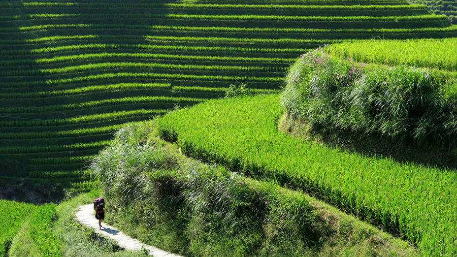High Angle View Of Woman Walking On Terraced Field