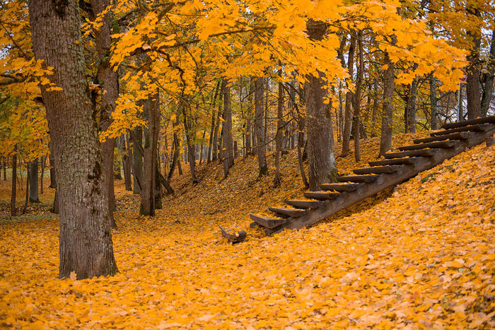 beautiful autumn landscape tells about Latvian nature Autumn Autumn Leaves Beauty In Nature Beauty In Nature Change Colors Day Deciduous Tree Forest Ladder Landscape Leaf Melancholy Nature No People Nostalgia Old Outdoors Plant Rural Scene Scenics Stairs Tree Wooden Yellow Place Of Heart