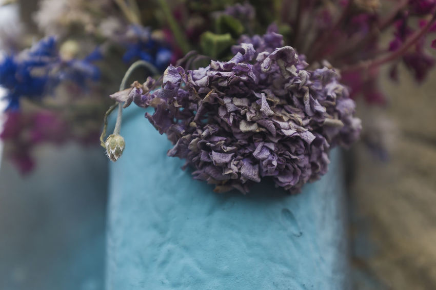 Botany Death Dying Flower Fragility Germany Nature Outdoors Petal Plant Purple Sadness Trier Wilted Flower