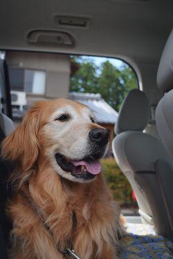 I Love My Dog Golden Retriever EyeEm Best Shots
