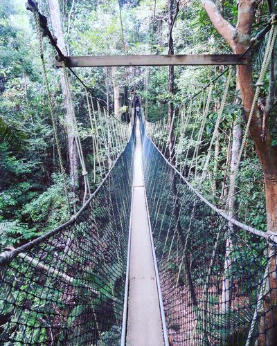 CanopyWalkway Taman Negara Malaysia Check This Out On The Road Jungle The Great Outdoors - 2016 EyeEm Awards