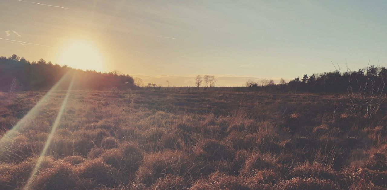 sky, environment, landscape, tranquility, sunlight, land, tranquil scene, beauty in nature, sun, field, nature, scenics - nature, no people, plant, non-urban scene, lens flare, tree, sunbeam, grass, bright, outdoors, brightly lit