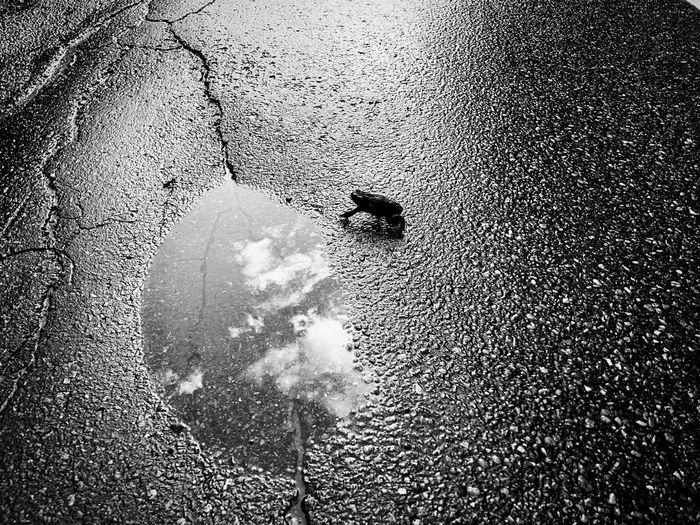 High angle view of person on puddle in city