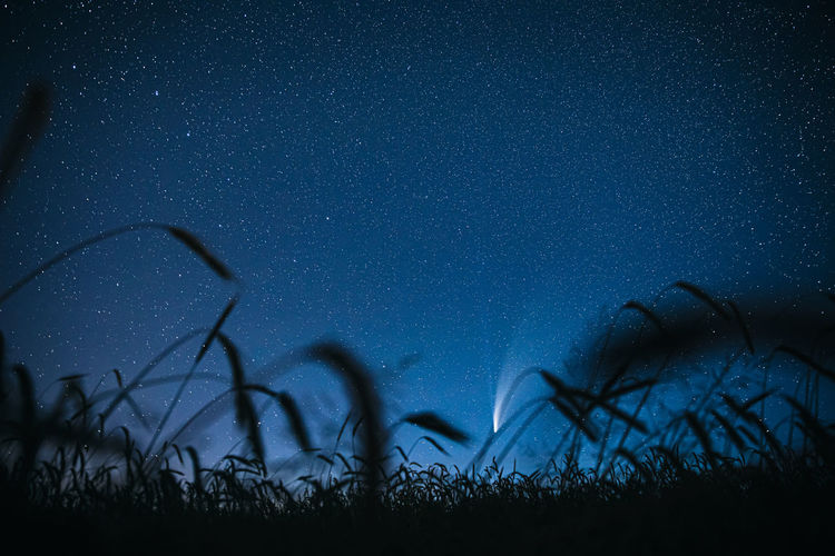 Silhouette plants against sky at night