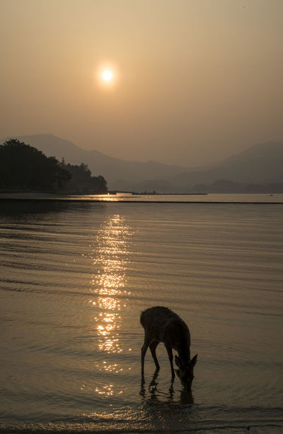 Animal Animal Themes Beauty In Nature Canine Domestic Domestic Animals Lake Mammal Mountain Mountain Range Nature No People One Animal Outdoors Pets Reflection Scenics - Nature Silhouette Sky Sun Sunset Water