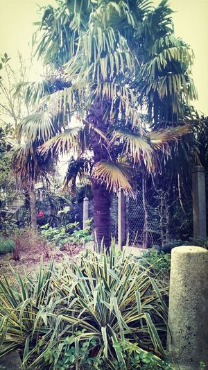 Feel Like Summer Palmier  Spring Nature