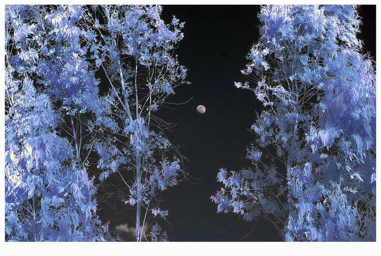 Sunlight Moon