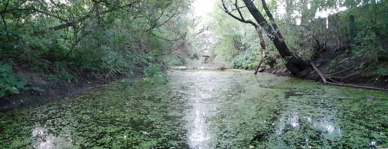 water channel River Nature Swamp Tree Water Green Color Grass Woods