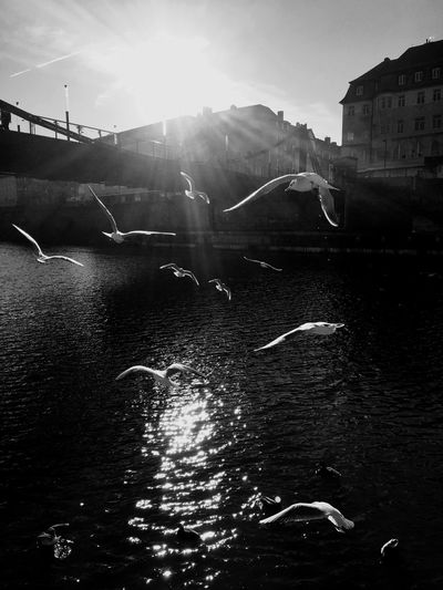 Bridge Gulls In