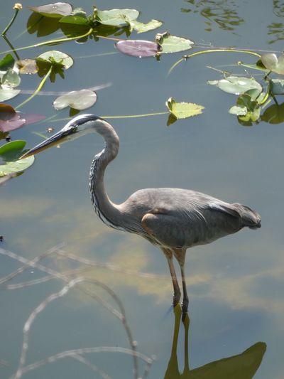 Water Animal Themes Animal Animal Wildlife Animals In The Wild Bird Vertebrate Lake Reflection Floating On Water
