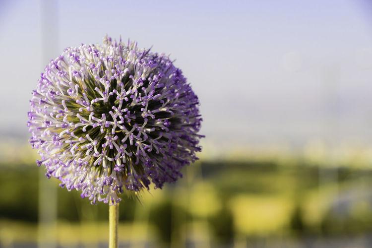 A summer flower