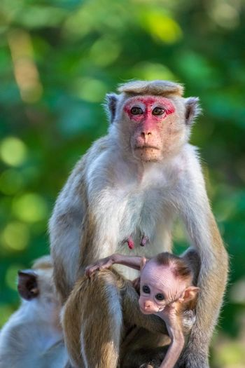 Mum 😚😚🤣 Animal Young Animal No People Vertebrate Togetherness Two Animals Animal Wildlife Animal Family Animals In The Wild Primate Female Animal Group Of Animals Sitting Focus On Foreground Day Care Outdoors Mammal