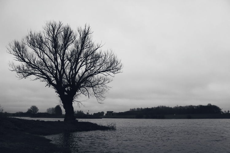 Black And White Photography Black And White Tree Bare Tree Rural Scene Branch Tree Trunk Single Tree Sky Landscape Lake Calm Frozen Lake Tranquil Scene Tree Area Tranquility Non-urban Scene