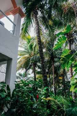Green Mexico Outdoor Living Architecture Building Building Exterior Built Structure Coconut Palm Tree Day Green Color Growth House Leaf Low Angle View Nature No People Outdoors Palm Tree Plant Plant Part Tree Tree Trunk Tropical Climate Tropical Tree Trunk