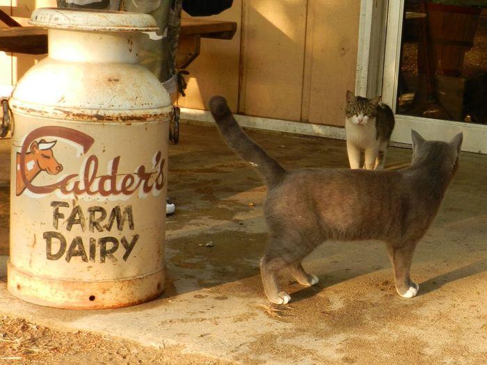 Cats around the