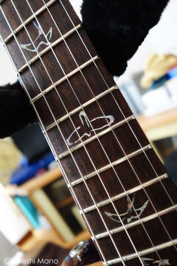 Guitar My Guitar Enjoying Life PRS