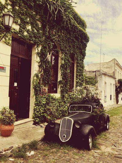 Alt Vintage Cars Vintage Oldcars Built Structure Building Exterior Tree Outdoors Plant Car Day Nature Transportation